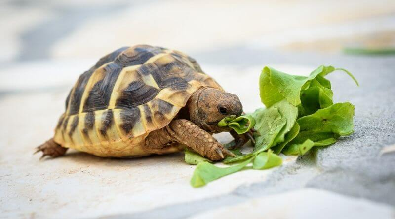 what do baby turtles eat